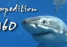 The Great Whites of Guadalupe Island